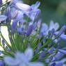 CANON Canon EOS 5Dで撮影した植物(梅雨の谷間に)の写真(画像)