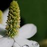 CANON Canon EOS 5Dで撮影した植物(?)の写真(画像)