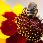 NIKON NIKON D90で撮影した植物(花31)の写真(画像)