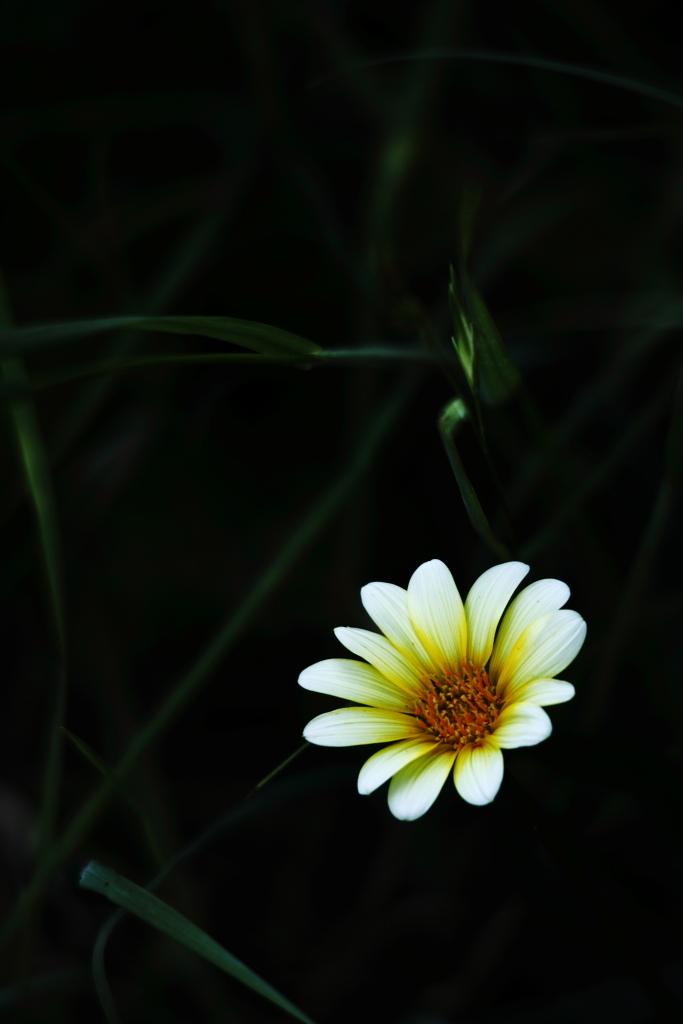雑草の中の一輪