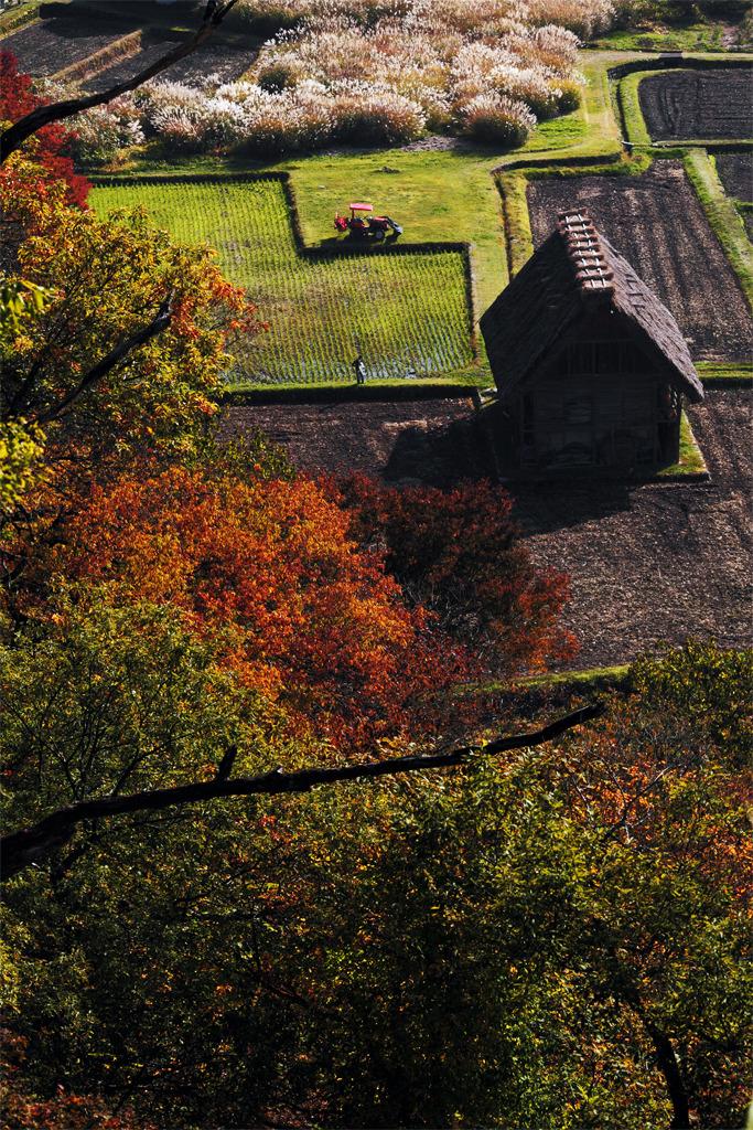 かやぶき農家と秋のよそおい