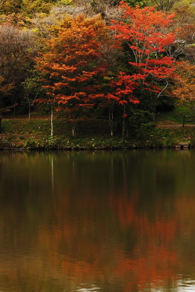 茶臼山高原1