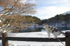 雪晴れの五色沼