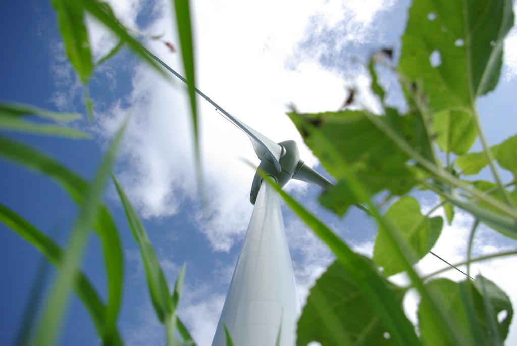 草むらから覗く風車