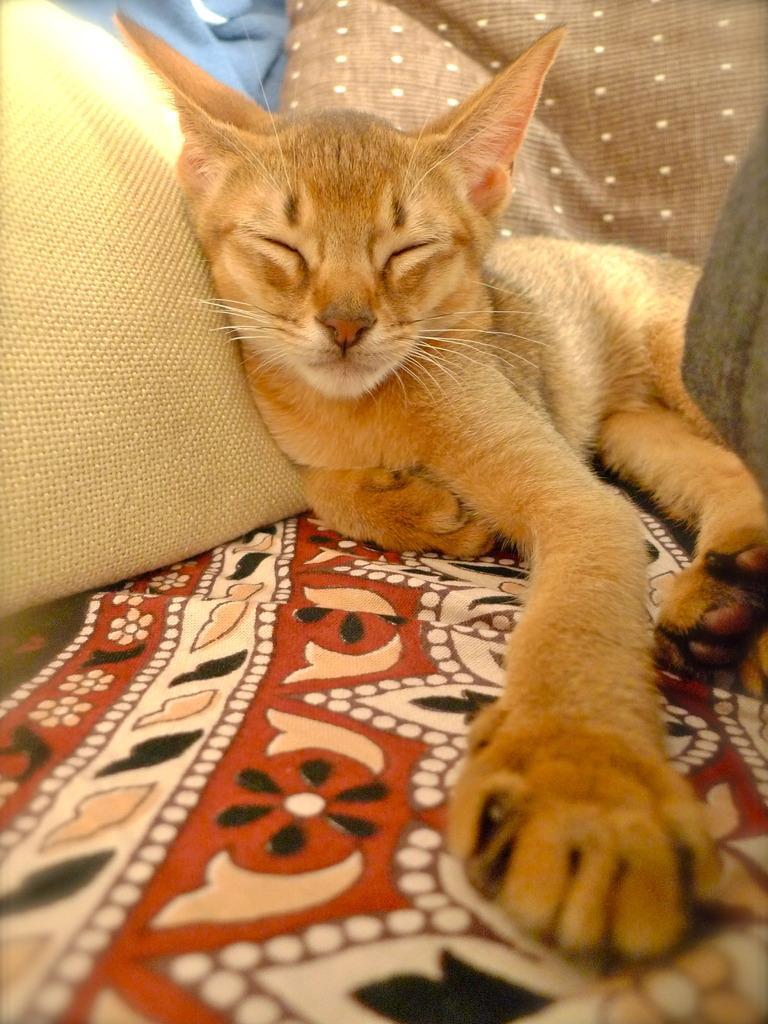 眠いニャー