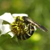 花粉にまみれて…
