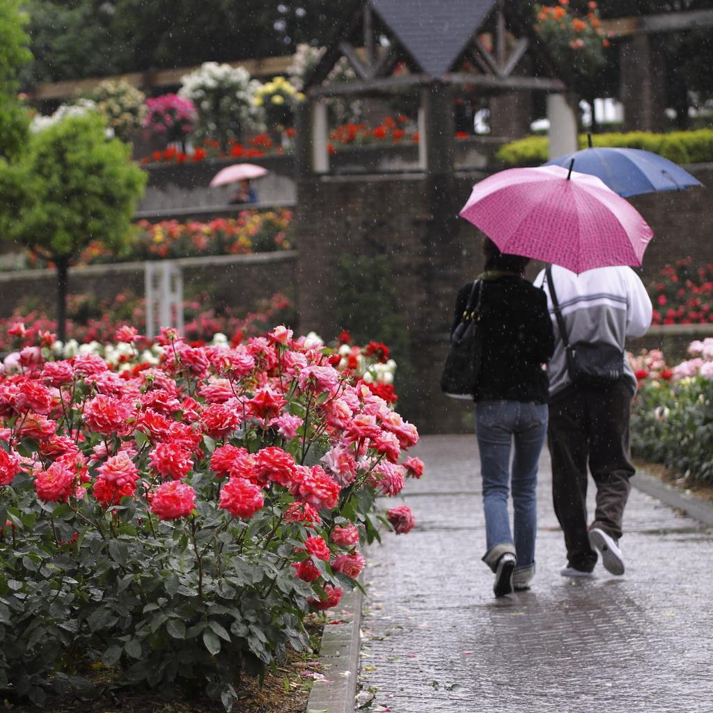傘を差して…。