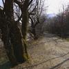 苔むした老木のある道