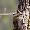 季節を見つめるゴジュウカラ