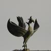 八つの尾を持つ鳥