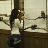 携帯カメラ女子、フクロウを撮影。