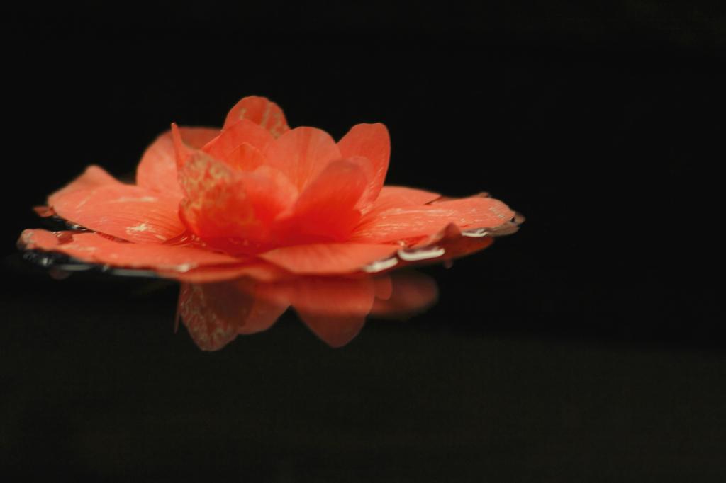 漂流する花