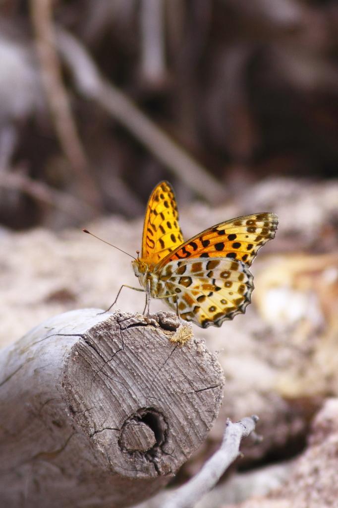 森林公園の蝶