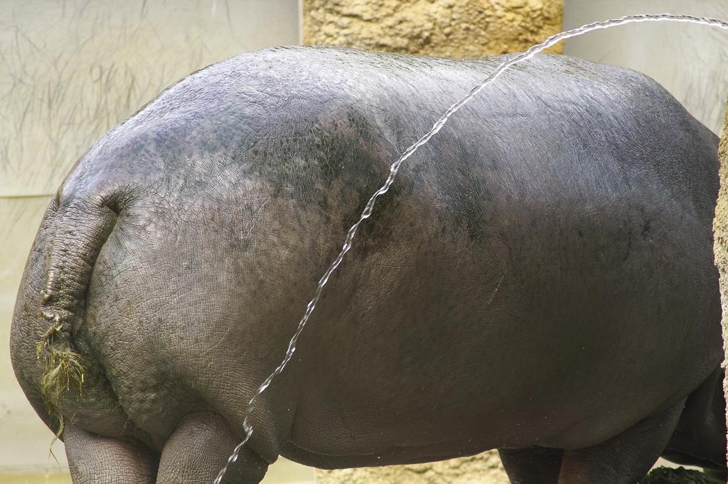 カバさんの尻尾
