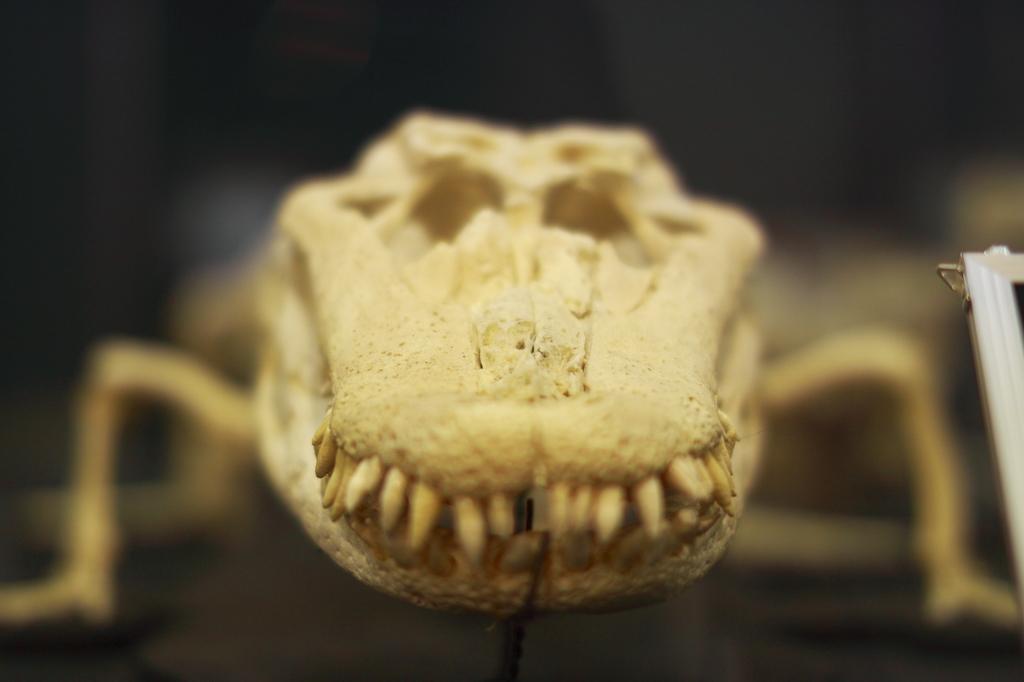 O Bone1