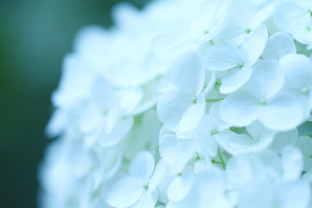 清々しい白