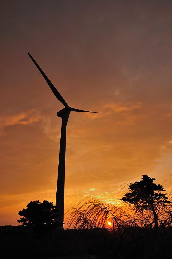 落日の風車