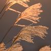 晩秋の輝き3