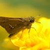 夏の終りの昆虫彩集2