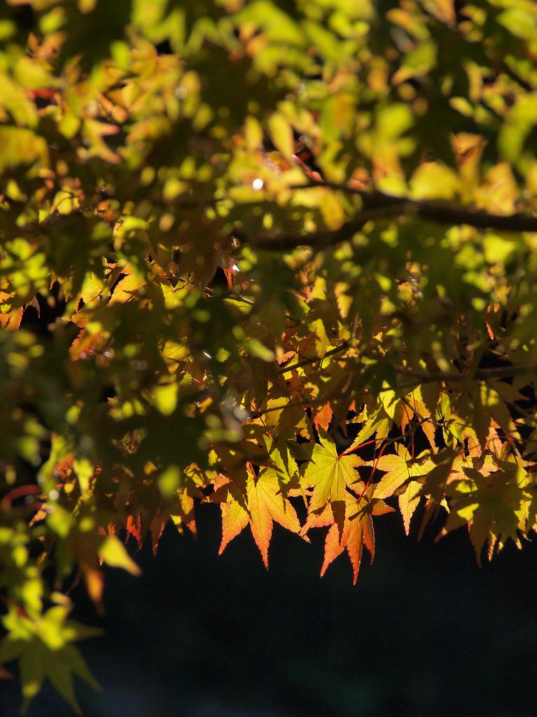 移りゆく秋