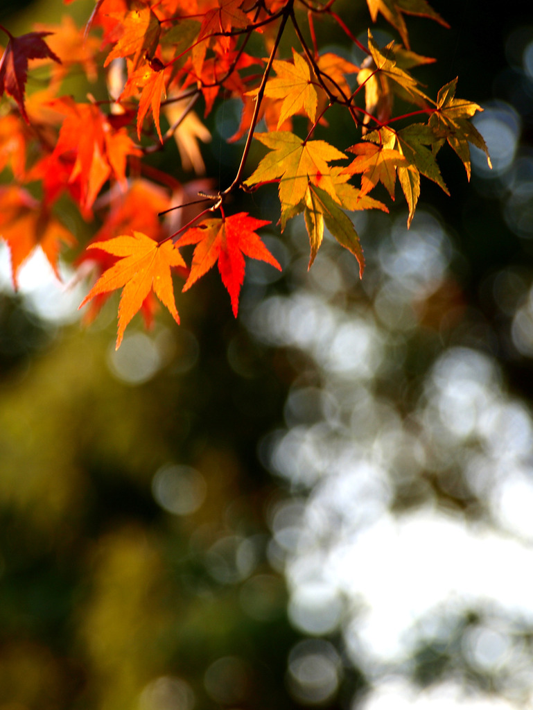 色濃く近づく秋
