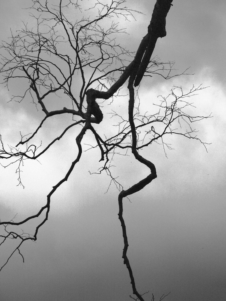 脈打つ枯れ木