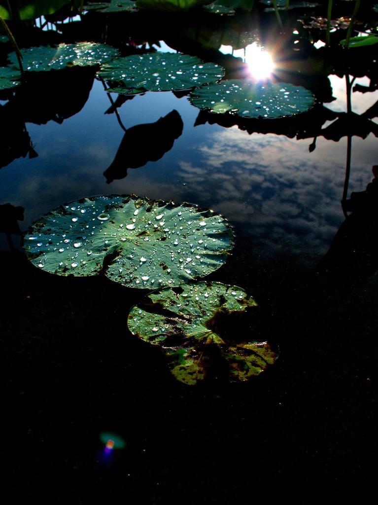 水面の宇宙