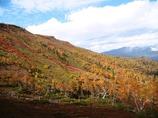銀泉台・紅葉の絨毯