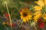 初秋の花たち3