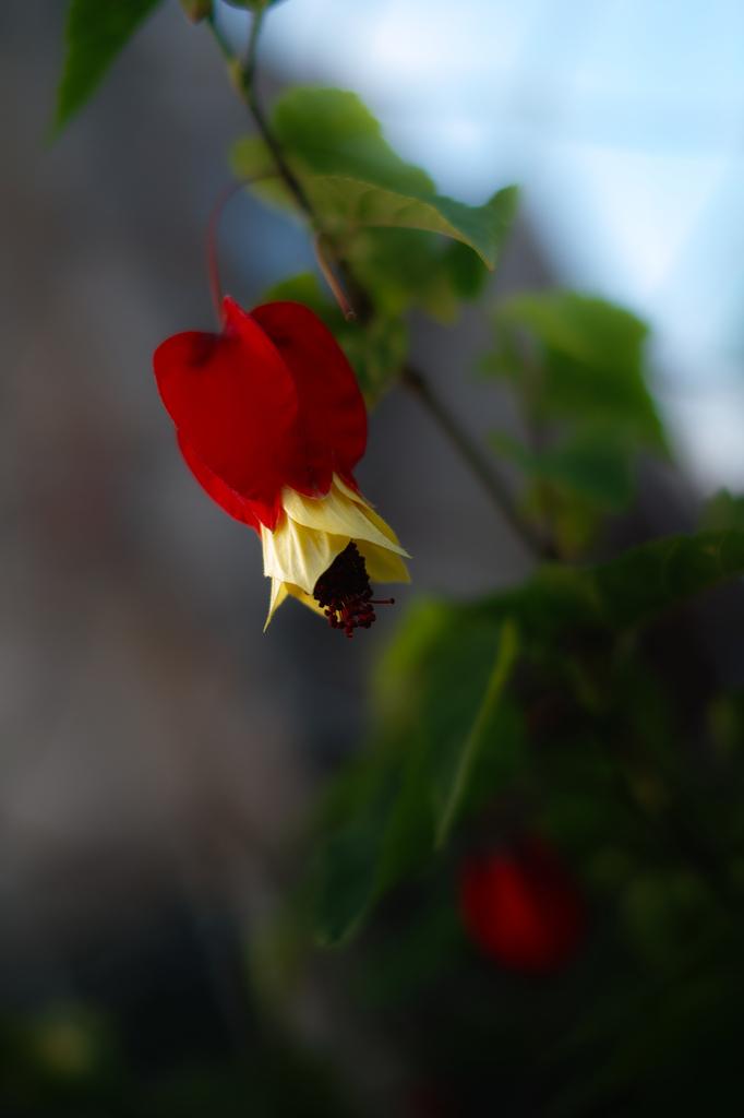 この花の名は?