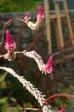 初秋の花たち2