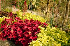 初秋の花たち5