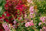 初秋の花たち1