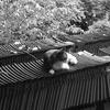 京都のとある神社で