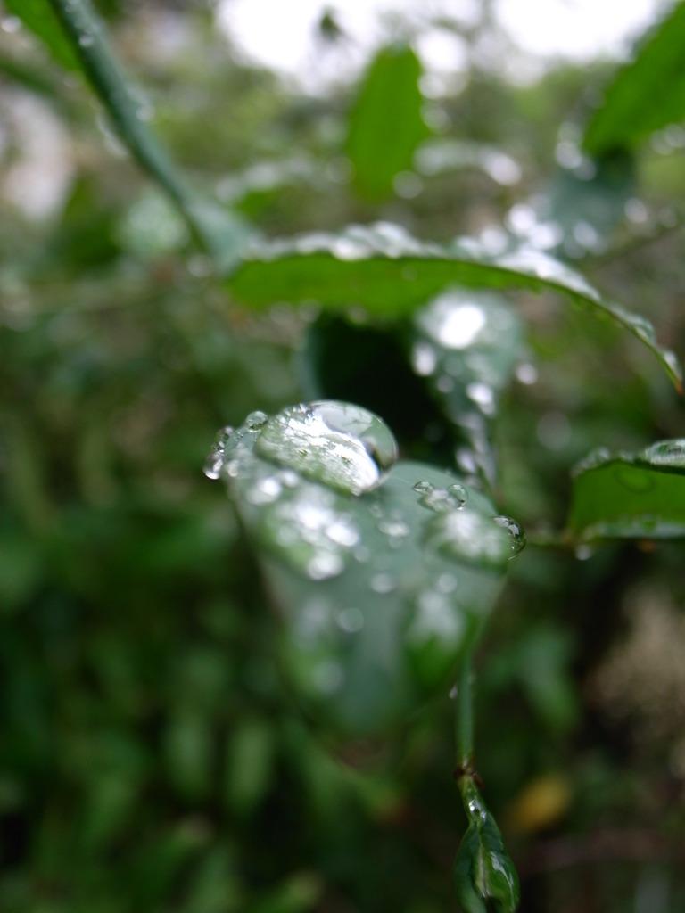 雨ばっかりだ