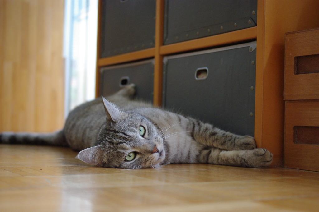 床は涼しいよ