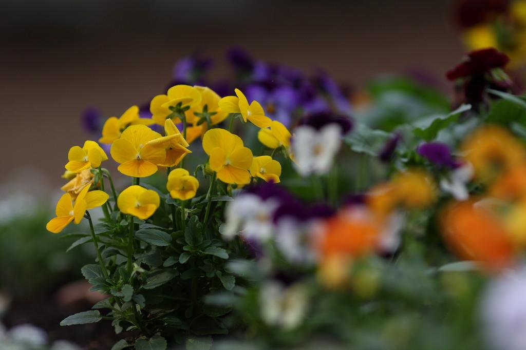 午後の花園