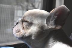 瞑想中。。。