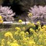 CANON Canon EOS 50Dで撮影した(出張で小湊鉄道4)の写真(画像)