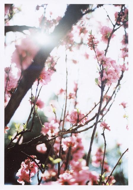 春の都の景色