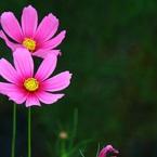 CANON Canon EOS 7Dで撮影した植物(秋の装い)の写真(画像)