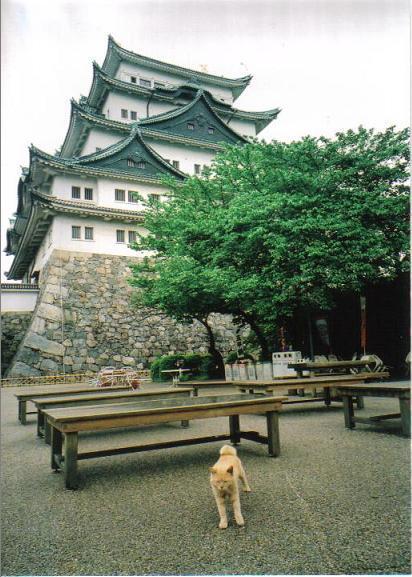 名古屋城ねこ