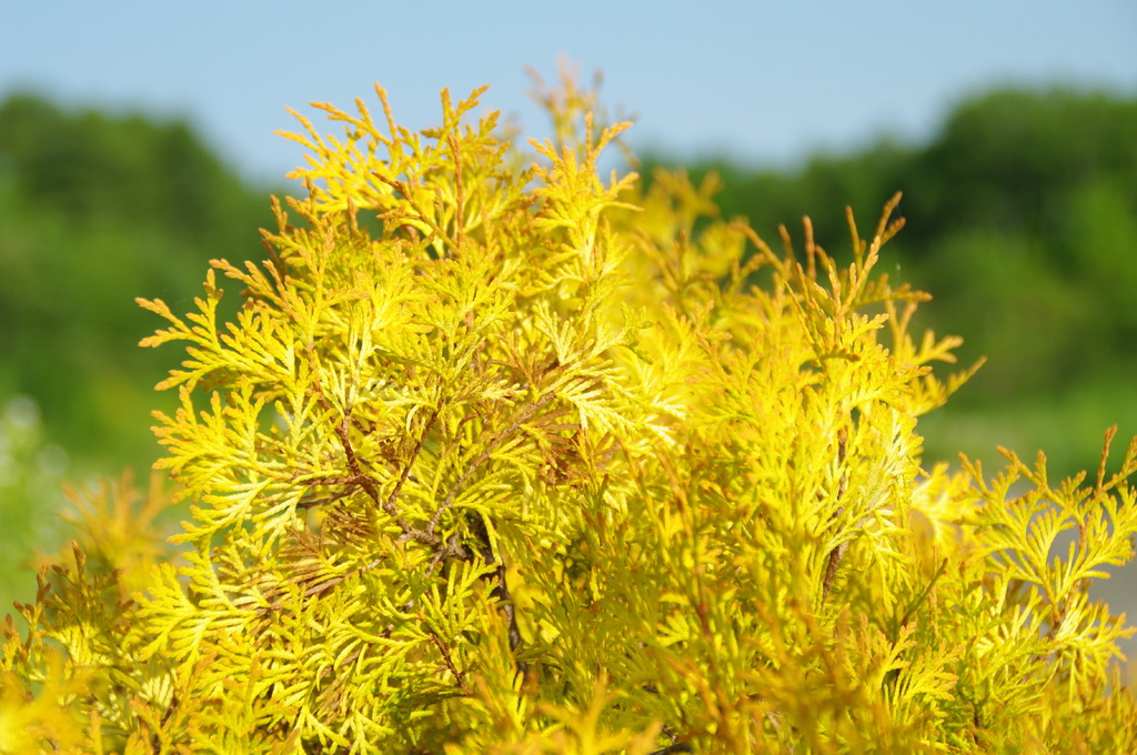 春先の黄色
