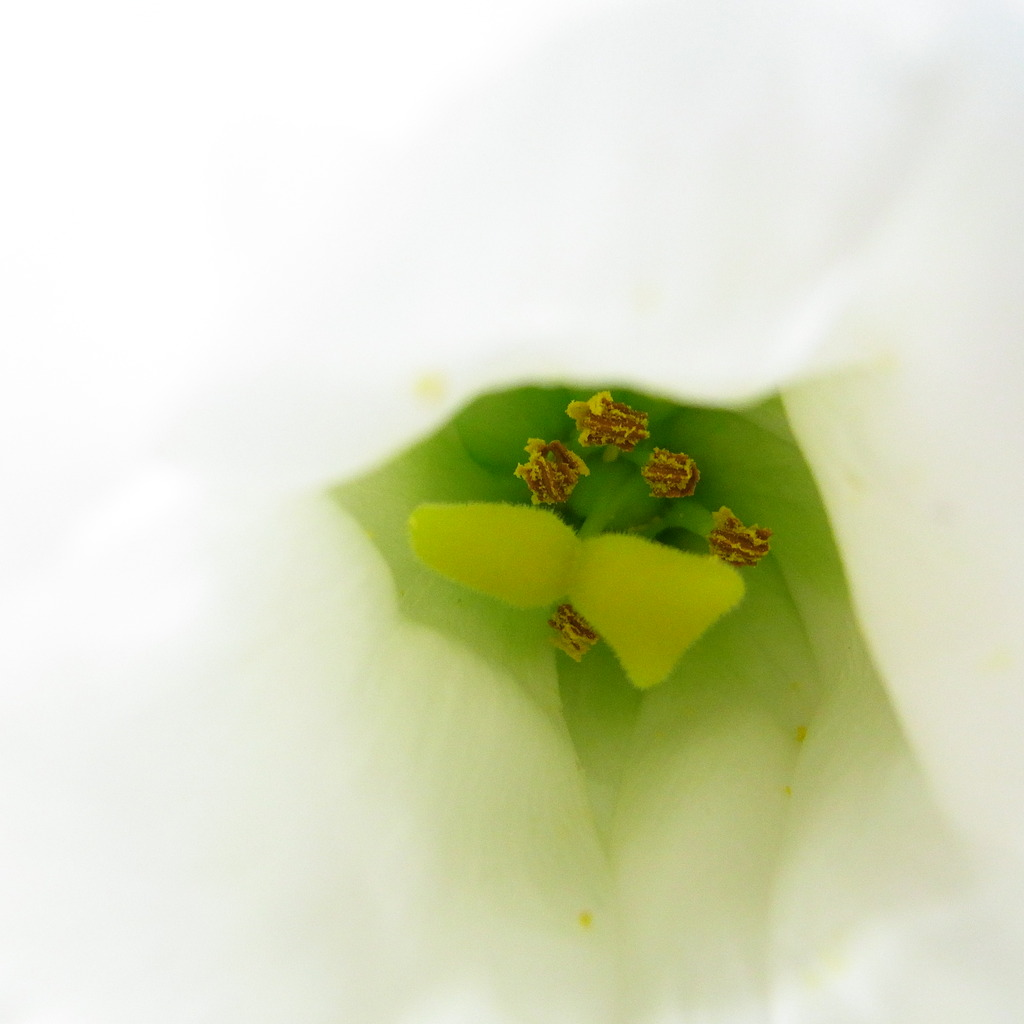 White &green