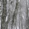 その他のカメラメーカー その他のカメラで撮影した(冬-八甲田01)の写真(画像)