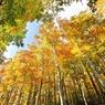 CANON Canon EOS 5D Mark IIで撮影した風景(巨木の森)の写真(画像)
