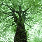 CANON Canon EOS-1DSで撮影した風景(樹)の写真(画像)