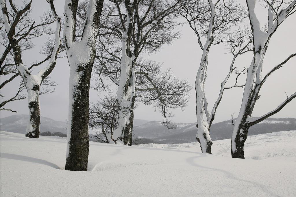05冬-八甲田01