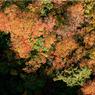 CANON Canon EOS-1DSで撮影した風景(城ヶ倉紅葉)の写真(画像)