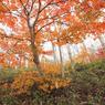 CANON Canon EOS 5D Mark IIで撮影した風景(白い森の主役達。)の写真(画像)